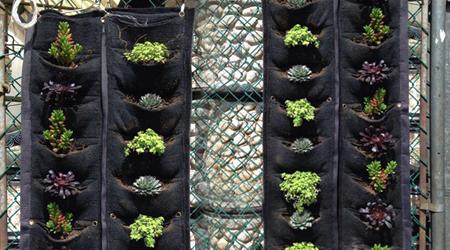 Modular de 1 m de largo de bolsa grande para muro verde for Tela para muro verde