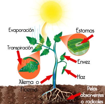 Gu a instalaci n de riego localizado hydro - Plantas que aguantan temperaturas extremas ...
