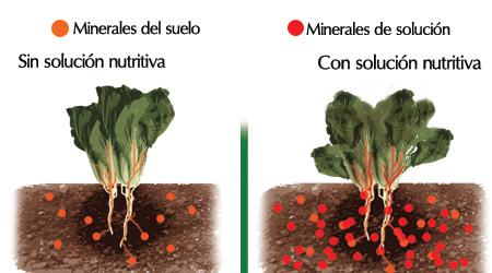 en el caso de trabajar con suelo este ya contiene minerales izquierda as que si nosotros agregamos una solucin nutritiva podramos causarle una
