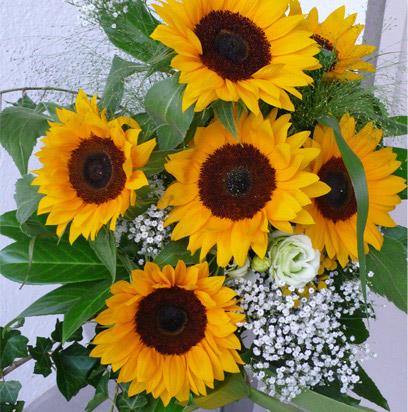 Gu a para cultivar flores ornamentales hydro for Plantas decorativas ornamentales