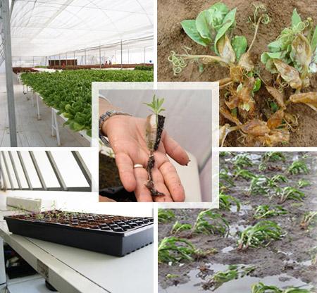 Importancia de los nutrientes en las plantas pdf