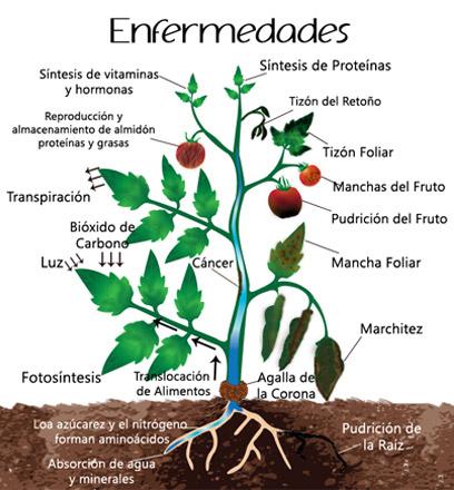 Guia enfermedades y plagas de los cultivos hydro for Todas las plantas son ornamentales