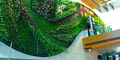 Guia qu son los muros verdes hydro environment for Muros verdes beneficios