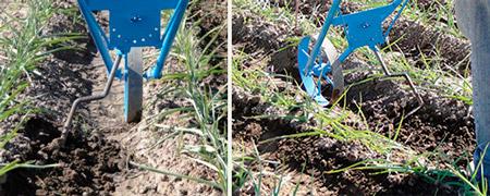 Guia cultivo de ma z 1ra parte hydro environment for Sembrar maiz y frijol juntos