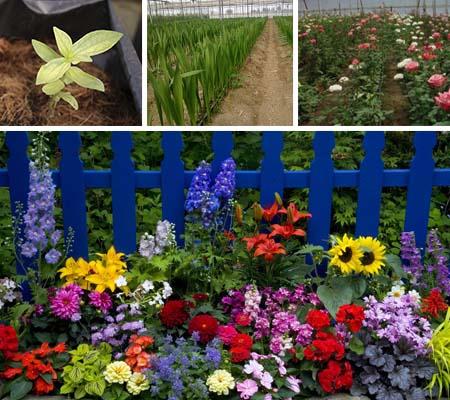 Gu a como conservar tus flores por mas tiempo for Plantas ornamentales con flores