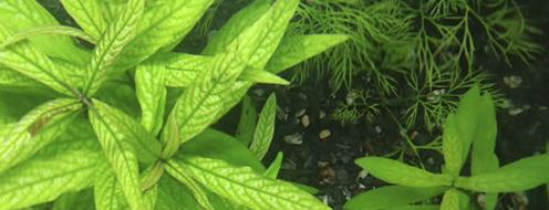 factores abióticos que causan enfermedades en las plantas