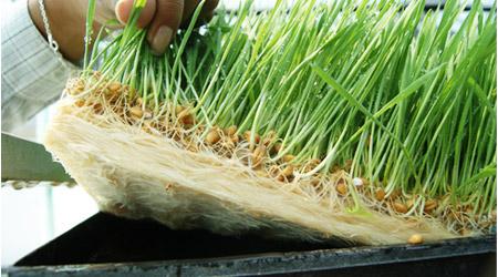 guia produccin intensiva de forraje verde hydro environment hidroponia en mexico
