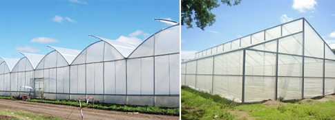 Guia invernadero para forraje verde hidroponico for Construccion de viveros e invernaderos