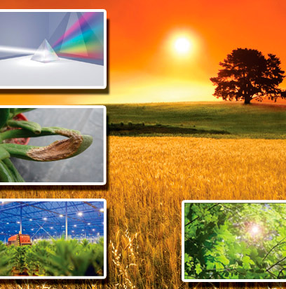 Gu a la luz en tus plantas hydro environment - Plantas que no necesitan luz ...