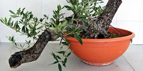 Guia cultivo de plantas y hortalizas por acodo for 20 plantas ornamentales