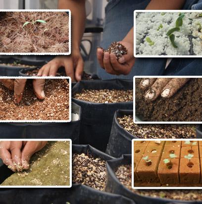 486e1c9fd En nuestro país existen una serie de sustratos que pueden ser empleados para  el desarrollo de cultivos hidropónicos, estos se utilizan solos o en  mezclas, ...