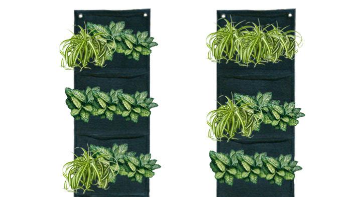 Muros verdes hydro environment hidroponia en mexico for Muros verdes en mexico