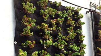 Muros verdes hydro environment for Muros verdes naturales